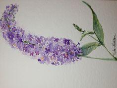 Watercolor by Tisha Sheldon, Butterfly Bush