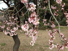 Parque La Quinta de Los Molinos. So beautiful in Spring! Xx