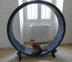 roue-à-chat