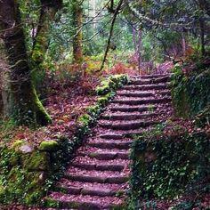 Bosque de Aldan. Pontevedra