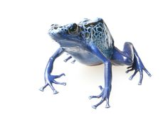 Enchanting Photos of Rare and Wonderful Frogs and Salamanders | WIRED (Beautiful gallery at link.)
