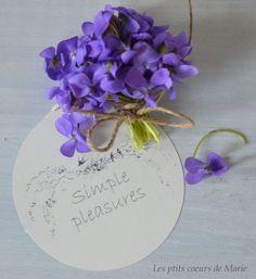Violet Sweet Violet