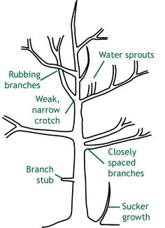 how to prune a small tree