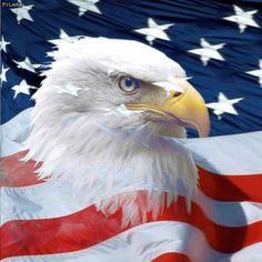 USA   American Bald Eagle iPad Wallpaper