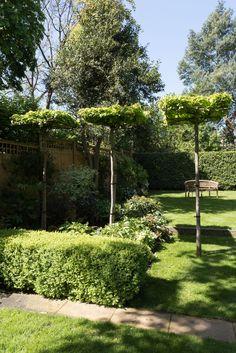 Parrotia Persica Trees. Garden designed by Karen Rogers @krgardendesign.com