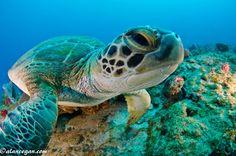Florida Keys. -