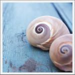 Seaside Inspired | natural sea shells and sea shell home accessories from seasideinspired.com