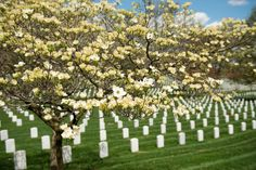 memorial day 2015 travel deals