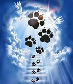 Pawprints to Heaven