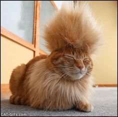 CAT GIF • Tyatora the Mohawk Cat, a cool and funny punk rocker chilling because Caturday