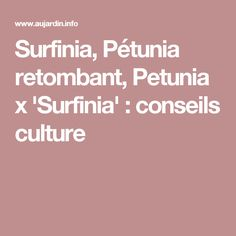Surfinia, Pétunia retombant, Petunia x 'Surfinia' : conseils culture