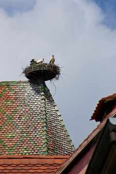 Stork's Nest in Colmar, Alsace, France. The rooftops often have multicolored patterns. Alsace France, Paris France, Beautiful Birds, Beautiful Places, Nester, Places To Travel, Places To Visit, Haute Marne, Foto Poster