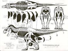 t-rex anatomical - Google Search