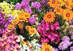 Make you garden full of colour by choosing the best annuals