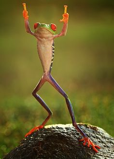 Coolest Frog Ever