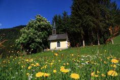 Johann im Pongau) Salzburg AUT Salzburg, Travel Goals, Golf Courses, Holiday, Plants, Vacations, Holidays, Flora, Plant