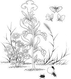 초충도 본그림 - 수박, 가지, 양귀비, 맨드라미 Embroidery Applique, Embroidery Patterns, Line Drawing, Art For Kids, Coloring Pages, Oriental, Carving, Tapestry, Floral