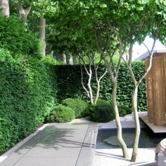 What a beautiful job of transforming a small space. Chelsea flower show Patio Trees, Garden Trees, Garden Paths, Back Gardens, Small Gardens, Outdoor Gardens, Modern Landscaping, Backyard Landscaping, Pinecrest Gardens