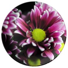 Purple mums in a macro lens close up photograph.