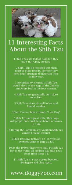 11 Interesting Facts about the Shih Tzu #ShihTzu