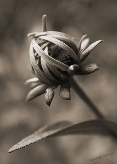 Examples of Sepia #Photography | PSDFan