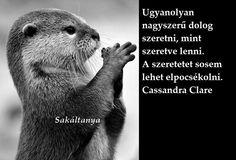 Cassandra Clare, Facebook, Photos, Pictures