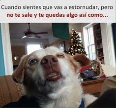 Imagenes de Humor #memes #chistes #chistesmalos #imagenesgraciosas #humor www.megamemeces.c... ツ➧ http://www.diverint.com/imagenes-graciosas-cargador-celular