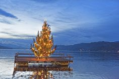 Swimming Christmas tree by ChristianThür Photography on Creative Market Creative, Greeting Cards, Christmas Tree, Swimming, Holiday, Photography, Travel, Teal Christmas Tree, Swim