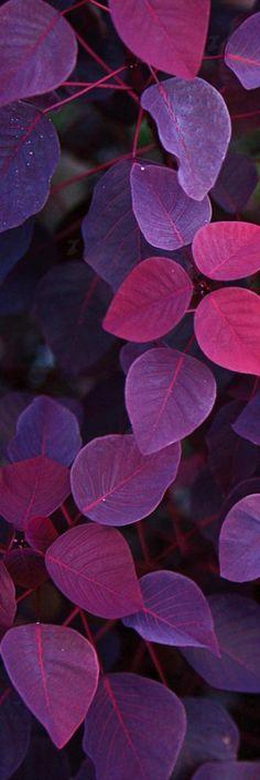 New flowers purple wallpaper colour 37 ideas Purple Wallpaper, Flower Wallpaper, Wallpaper Backgrounds, Iphone Wallpaper, Beautiful Nature Wallpaper, Beautiful Flowers, Vino Color, All Things Purple, Purple Aesthetic