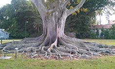 Edison Ford Estates funky tree