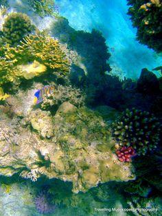 Red Sea Snorkel 2009