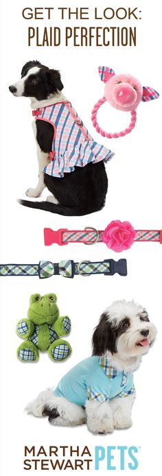 Your pets will look perfect in plaid with the #MarthaStewartPets Summer Collection @petsmartcorp !