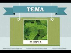 Beneficios, nutrientes y propiedades de la menta. Más información en: http://www.remediocaseronatural.com/comidas-sanas-beneficios-menta.htm