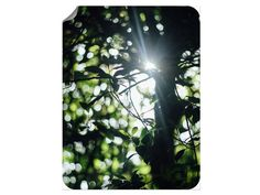 Wald Sonnenstrahlen Klebefolie