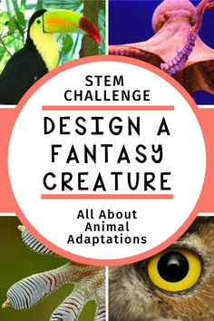 animal biology Free animal adaptations lesson plan - Design a Fantasy Creature! Check out our free activity guide, printable creature planners, plus videos amp; books to help your learners use animal adaptions to create an amazing new creature! Stem Projects, Animal Projects, Science Projects, Science Lessons, Teaching Science, Life Science, Science Labs, Science Classroom, Earth Science