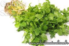 Coentro, Efeitos Benéficos na Saúde  Não pode faltar na salada ou refogado !