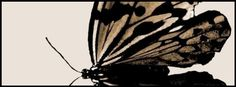 Butterfly Facebook cover photo