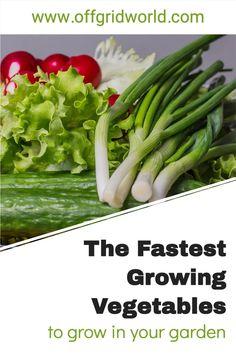 Fast Growing Vegetables, Healthy Food, Healthy Recipes, Starting A Garden, Urban Farming, Food Industry, Vegetable Garden, Homestead, Gardening