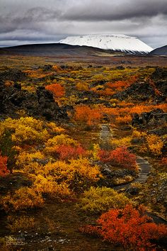 The glorious autumn colors in Dimmuborgir by Lake Myvatn   with a view of the crater Hverfjall and Mt Búrfell, N-Iceland.