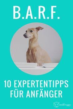 BARF   Hunde   Ernährung   Tipps   Anfänger
