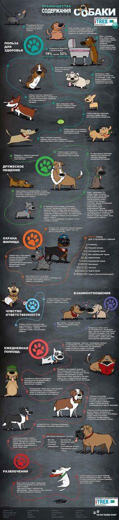 Все любят собак! Собаки - это не только клево, но и полезно :)