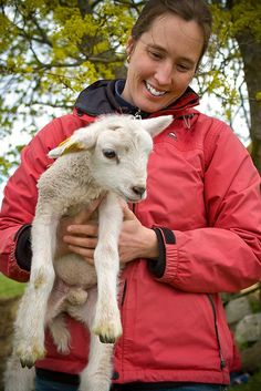 A Beginner's Guide to Raising Sheep | Self-Sufficiency and Homesteading Ideas by Survival Life at http://survivallife.com/a-beginners-guide-to-raising-sheep/