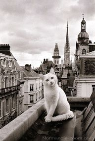 Paris cat