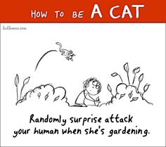 HOW TO BE A CAT   Comic