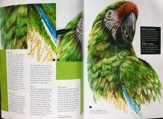 """An article of Marjolein Kruijt, using """"Water color markers"""" of winsor&newton. Published in dutch art magazine atelier in 2015. Www.marjoleinkruijt.com #winsornewton @winsornewton #watercolors #birdsinart"""