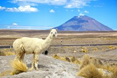 Stretching from the Pacific coast up to the high peaks of the Andes, Peru inspires everyone with an alluring cocktail of history, culture, cuisine and wildlife. http://worldspree.com/southamericatours/peru-tours.aspx