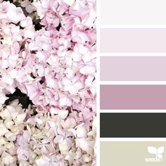 today's inspiration image for { flora hues } is by @anniebluelowry ... thank you, Anna, for another wonderful #SeedsColor photo share!