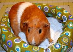 TUTORIAL: Simple Pet Bed - Sewplicity or http://jembellish.blogspot.com/2012/03/pet-bed-tutorial-anyone-can-sew-this-in.html