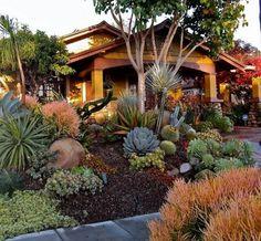 maison style colonial avec un jardin à l avant avec des plantes succulents et palmiers, terreau, galets arbre oranger, plantes de rocaille exotiques