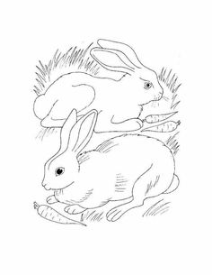 Rabbits Eating Carrots Coloring Page From Category Select 28436 Printable Crafts Of Cartoons Nature Animals Bible And Many More